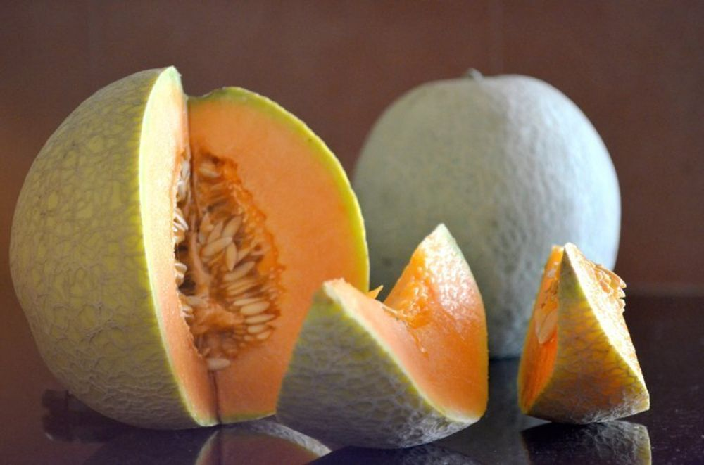 muskmelon_high_res.JPG